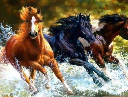 Pics Of Horses Running Through Water