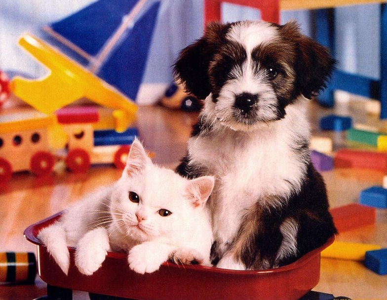 Pics Of Puppies And Kittens