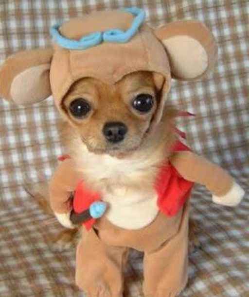 Pics Of Puppies In Costumes