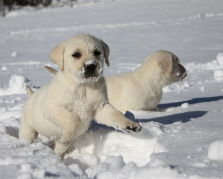 Pics Of Puppies In The Snow
