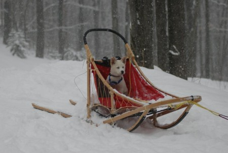 Picture Of A Dog Sled