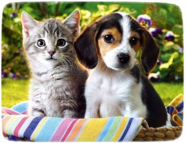 Picture Of Cat And Dog