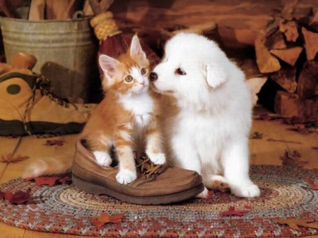 Picture Of Dogs And Cats