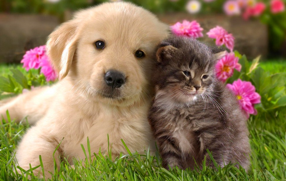 Picture Of Dogs And Cats Together