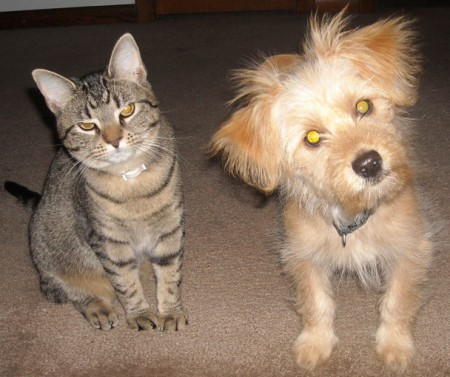 Pictures Of Cats And Dogs Together