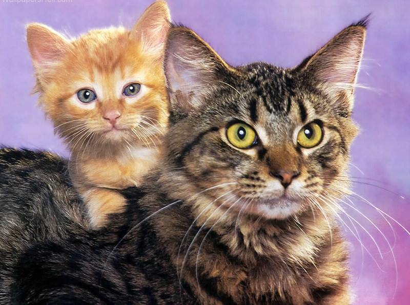 Pictures Of Cats And Kittens