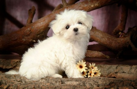 Pictures Of Dog Breeds Puppies