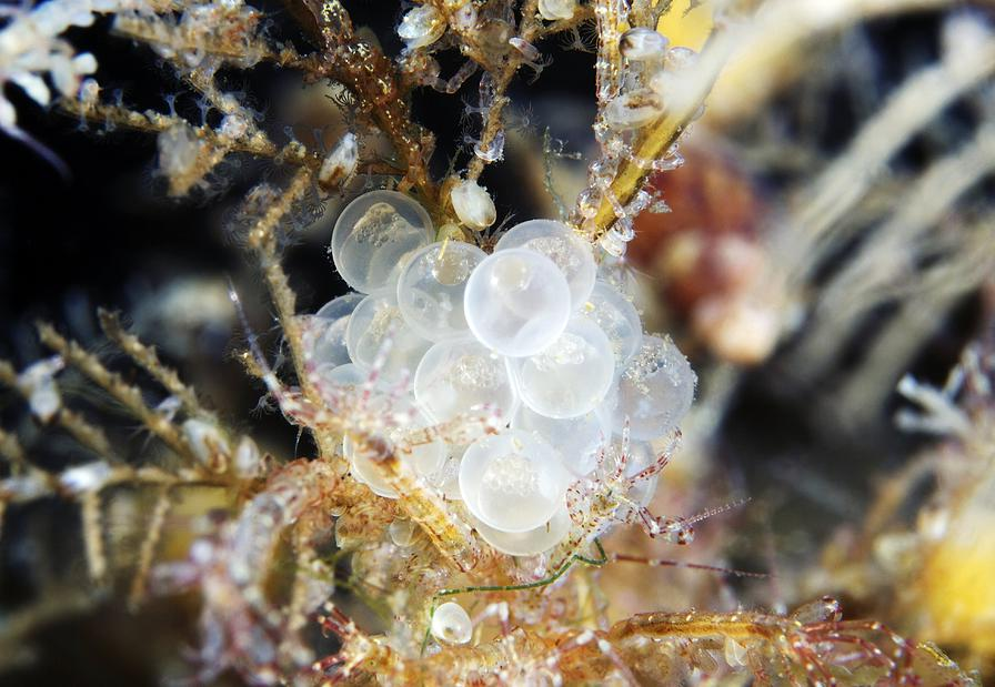 Pictures Of Fish Eggs
