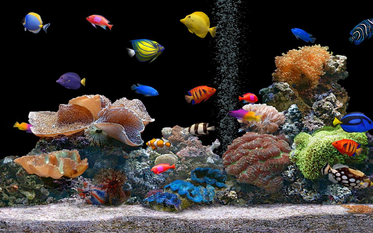Pictures Of Fish In An Aquarium