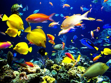 Pictures Of Fish In The Ocean