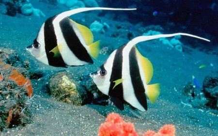 Pictures Of Fish In The Sea