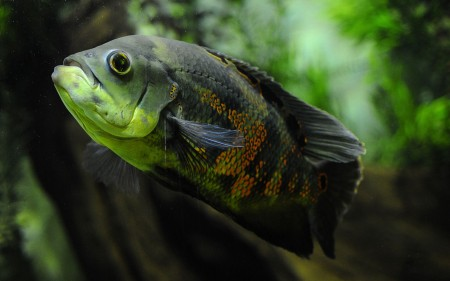 Pictures Of Fish In Water