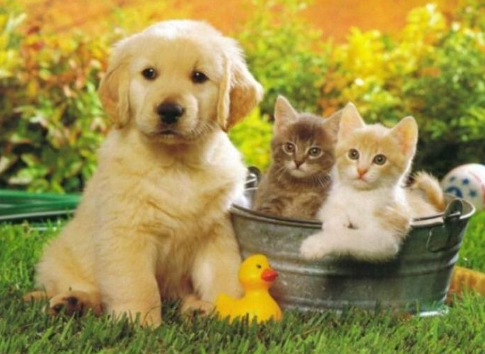 Pictures Of Puppies And Kittens