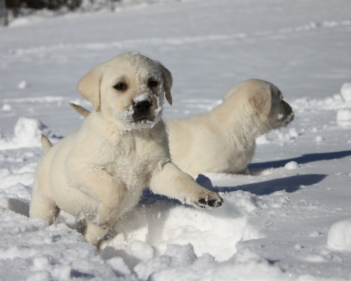 Pictures Of Puppies In The Snow