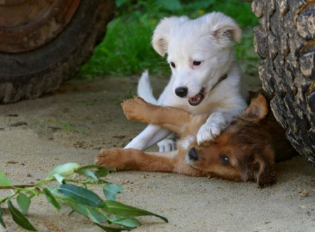 Pictures Of Puppies Playing