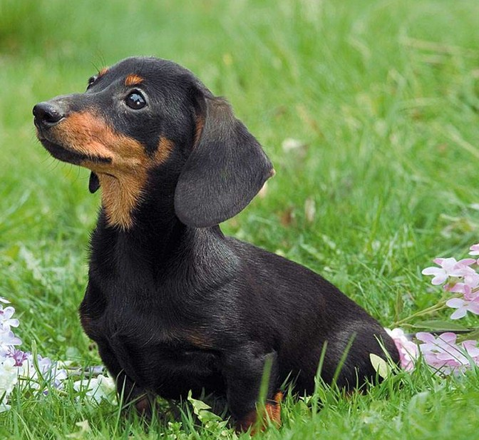 Pictures Of The Most Popular Dog Breeds