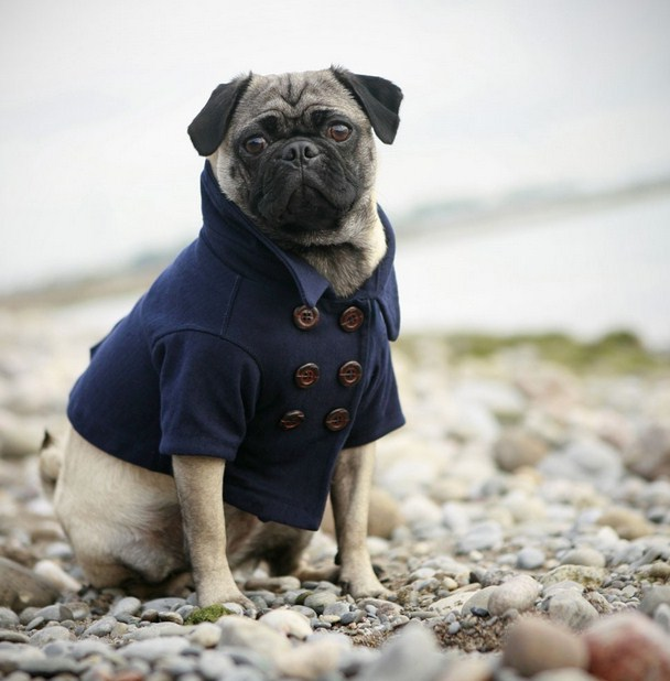 Pug Clothes For Dogs