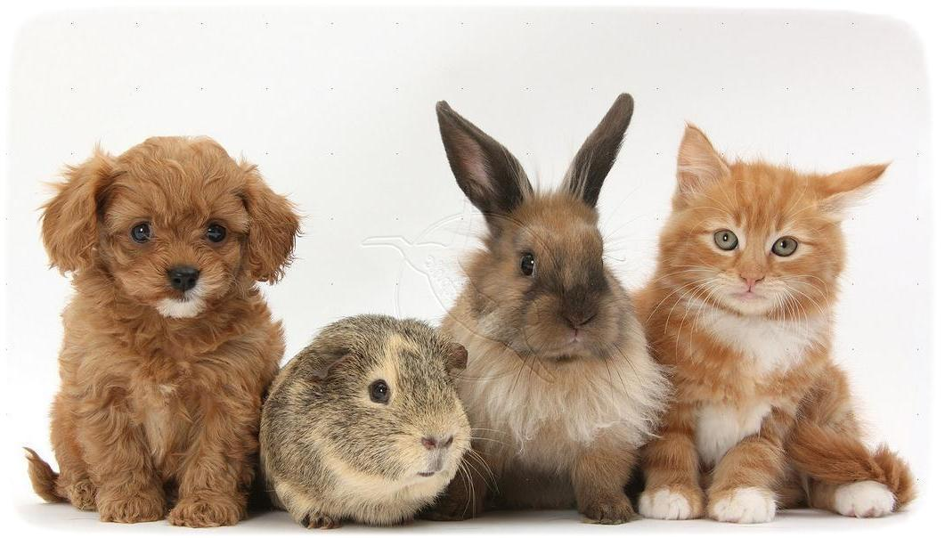 Puppies And Kittens And Bunnies Together