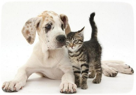 Puppies And Kittens Images