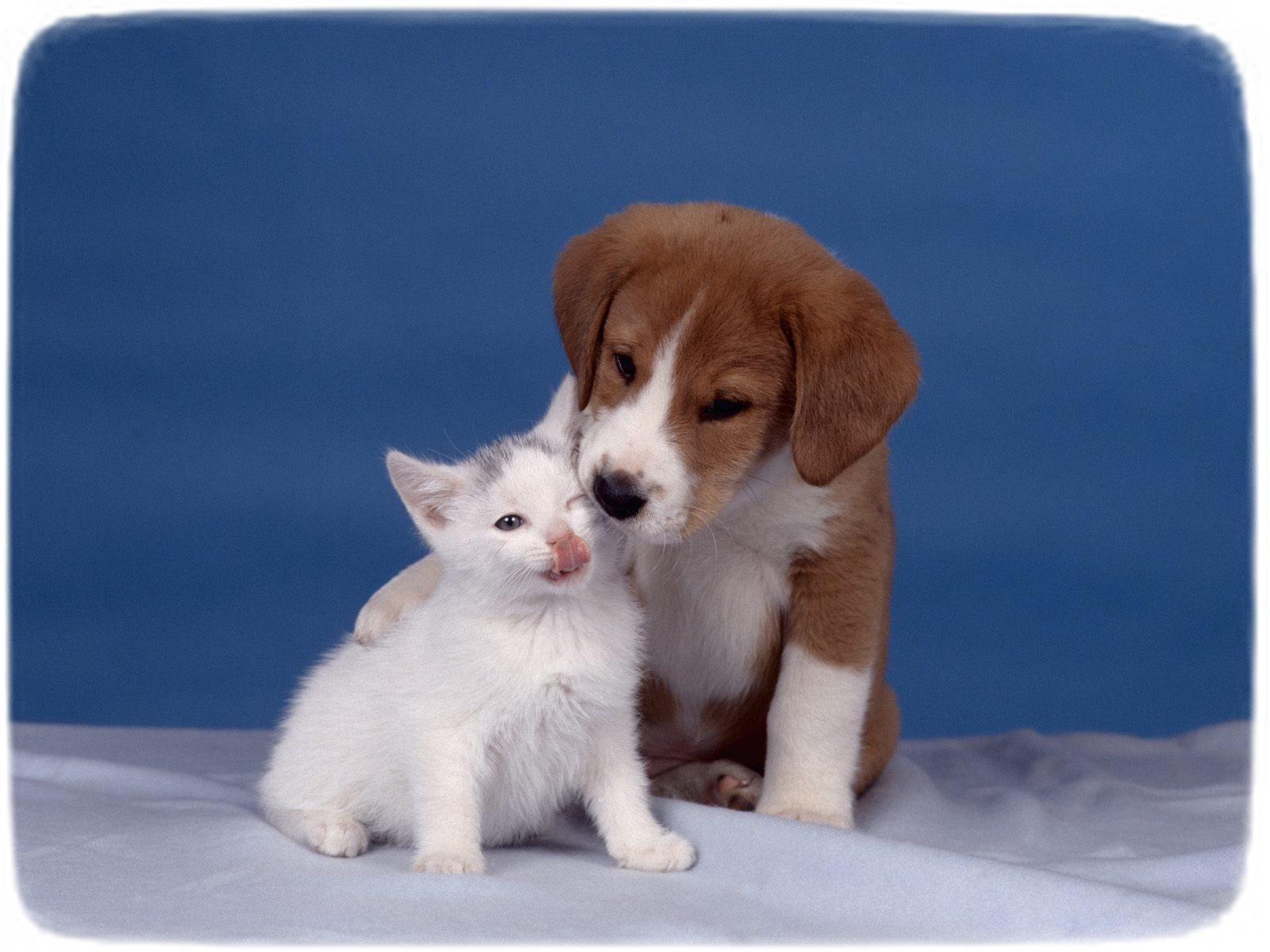 Puppies And Kittens Kissing
