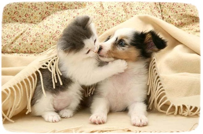 Puppies And Kittens Playing