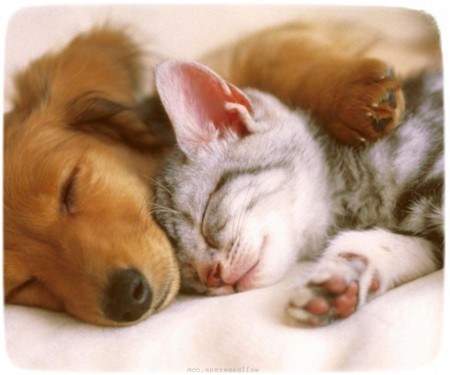 Puppies And Kittens Sleeping