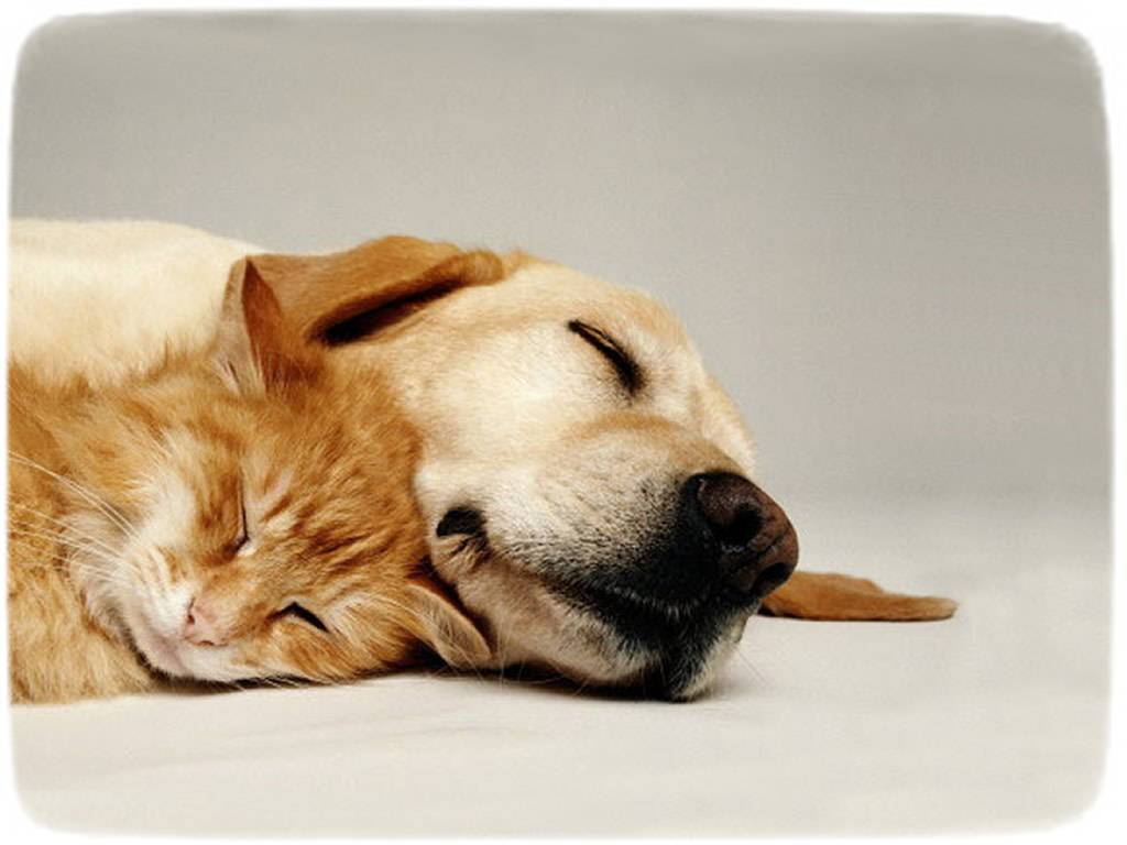Puppies And Kittens Sleeping Together