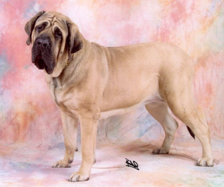Rare Dog Breeds In India