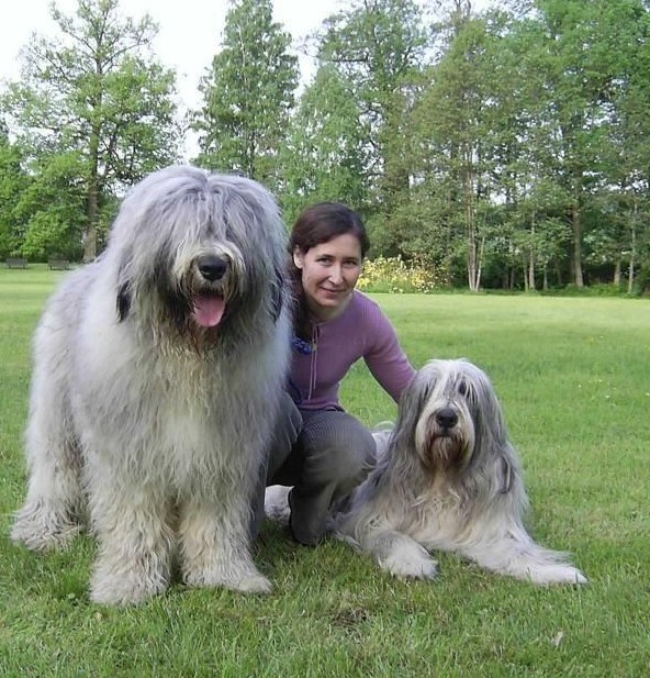 Russian Dog Breeds Huge