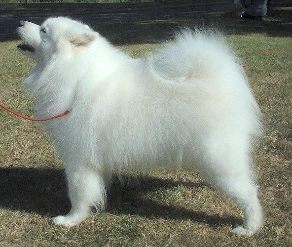 Russian Dog Breeds Pictures