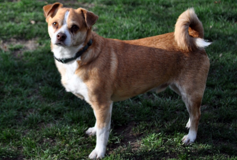 Short Haired Dogs With Floppy Ears