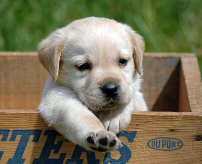 Small Breed Dogs For Kids