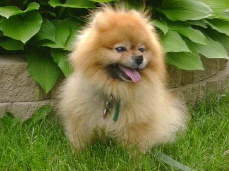 Small Breed Dogs Pictures And Names