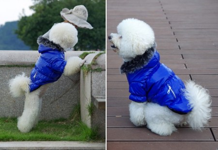 Small Dog Clothes Male