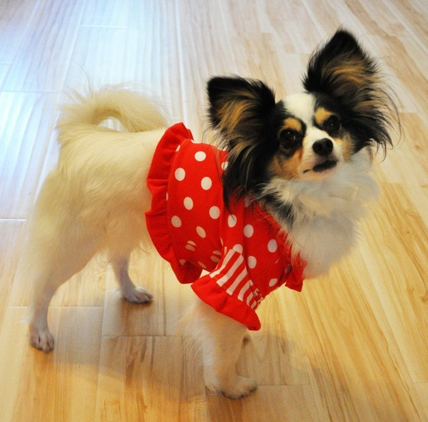 Small Dog Clothes Patterns