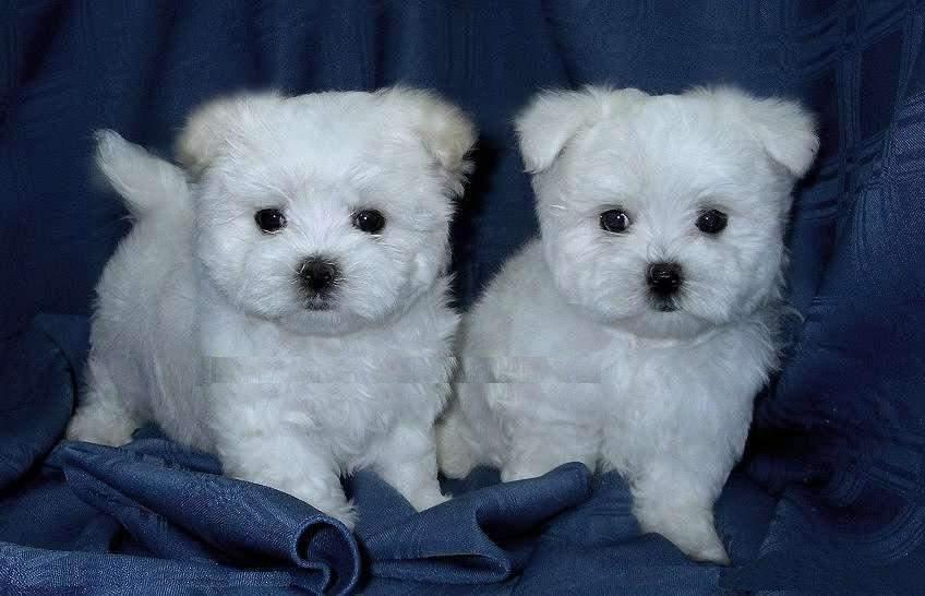 Small Dog For Adoption