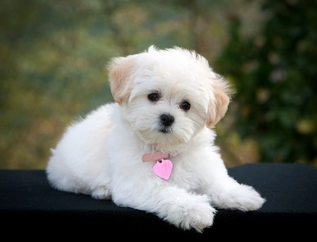Small Dogs Breeds Images
