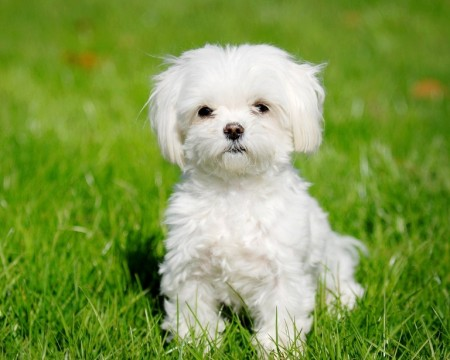 Small Hypoallergenic Dogs For Kids