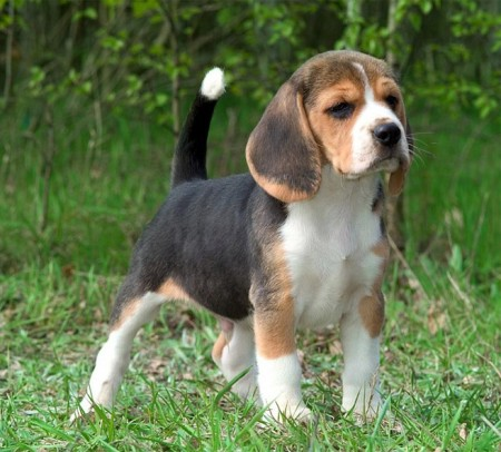 Small To Medium Sized Dog Breeds