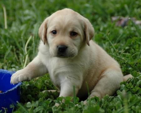 Smallest Dog Breeds Ever