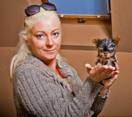 Smallest Dog In The World Guinness 2012