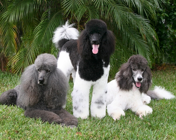Smartest Dog Breeds In The World 2013