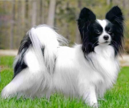 Smartest Dog Breeds In The World