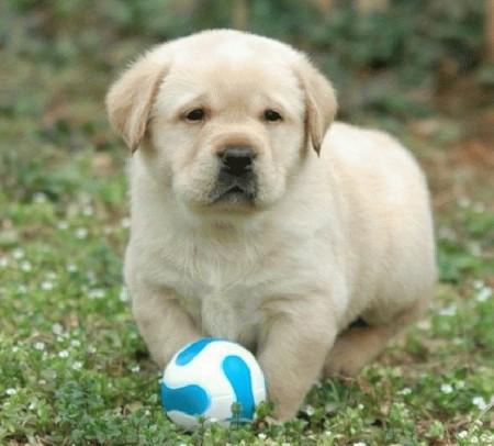 Smartest Dog Breeds List 2012