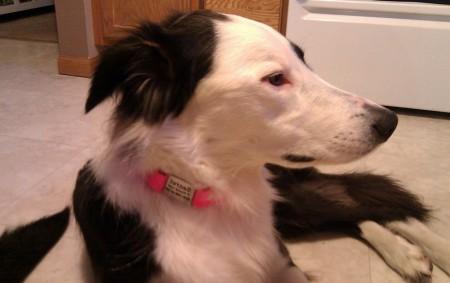 Sport Dog Bark Collar