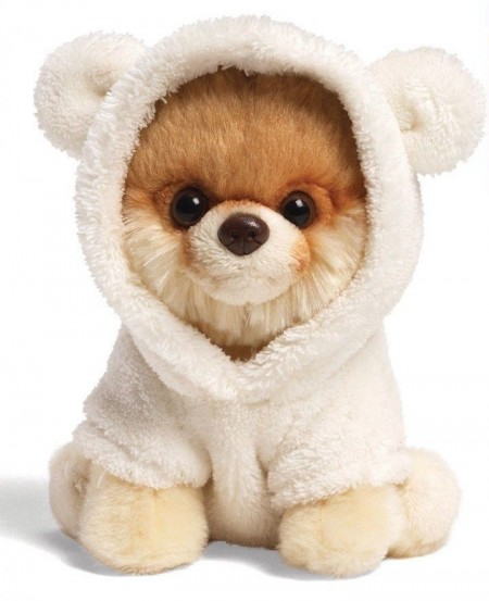 Teddy Bear Dog Pomeranian