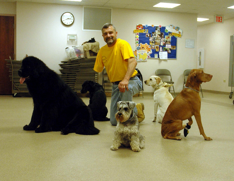 Therapy Dog Training Chicago