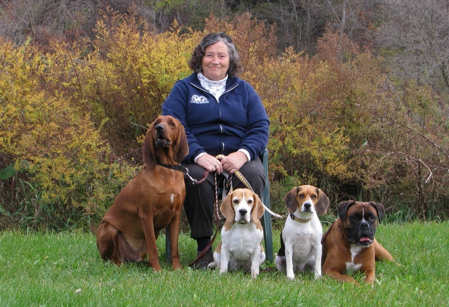 Therapy Dog Training Mn