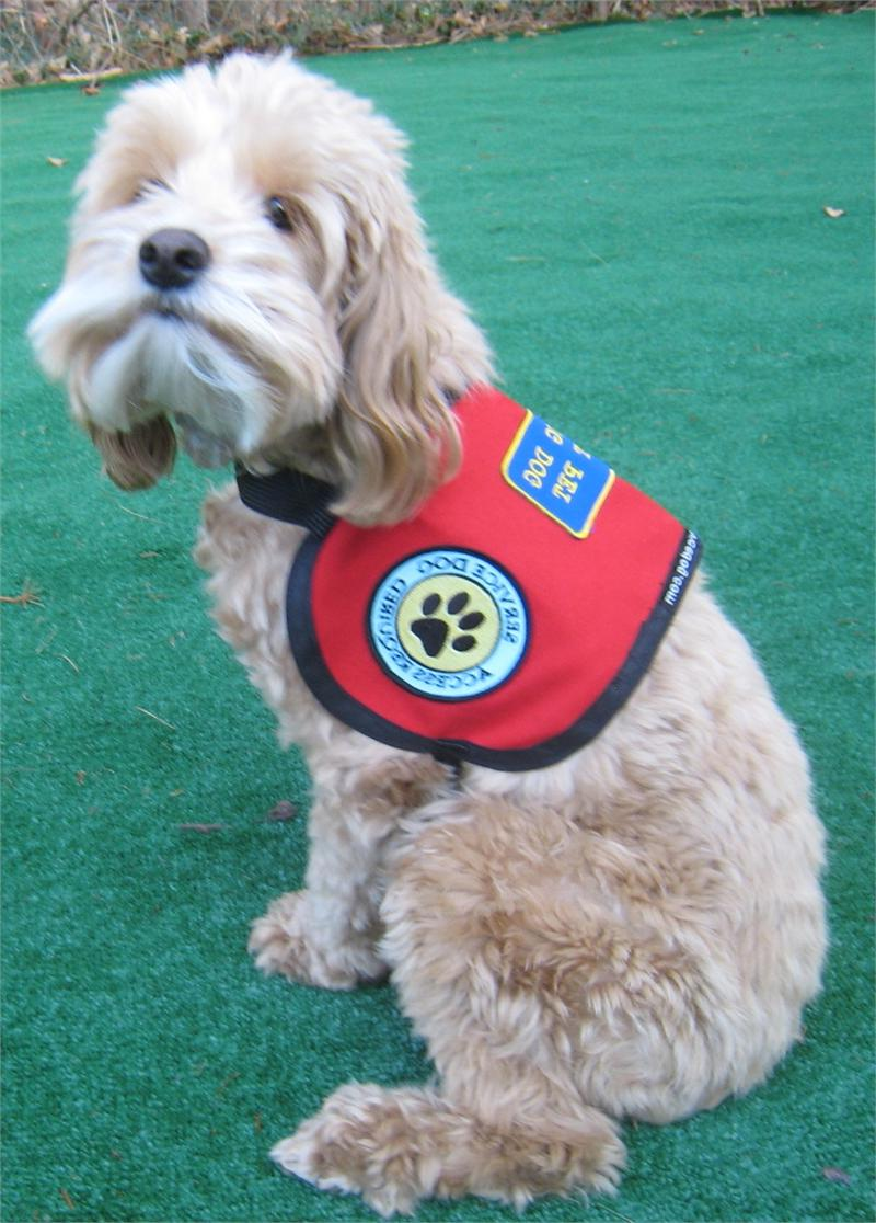 Therapy Dog Vest Ebay