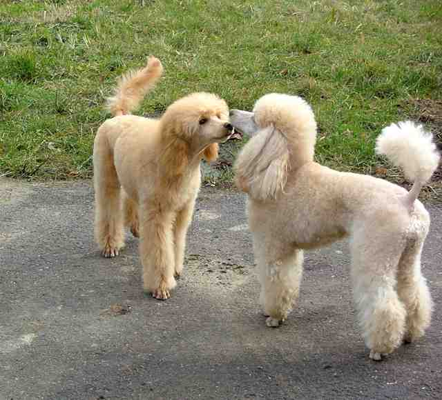 Top 10 Best Small Dogs